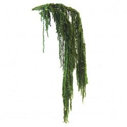 Амарант зеленый