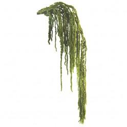 Амарант светло-зеленый