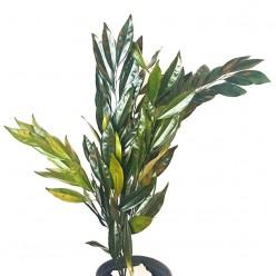 Кокулус зеленый