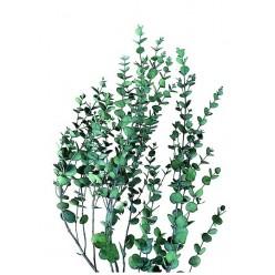 Гуни Эвкалипт зеленый