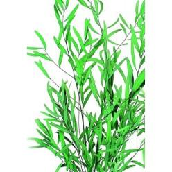 Николи эвкалипт зеленый 1 букет