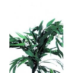 Пендула эвкалипт зеленый 1 букет