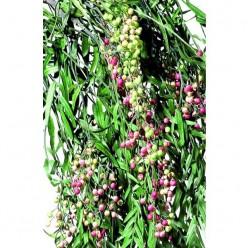 Пепертри ветви зеленый