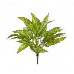 Аглаонема зелёно-жёлтая куст в-40 см  (30 листов) (Sensitive Botanic) 12/96 IRTR-20.1121N