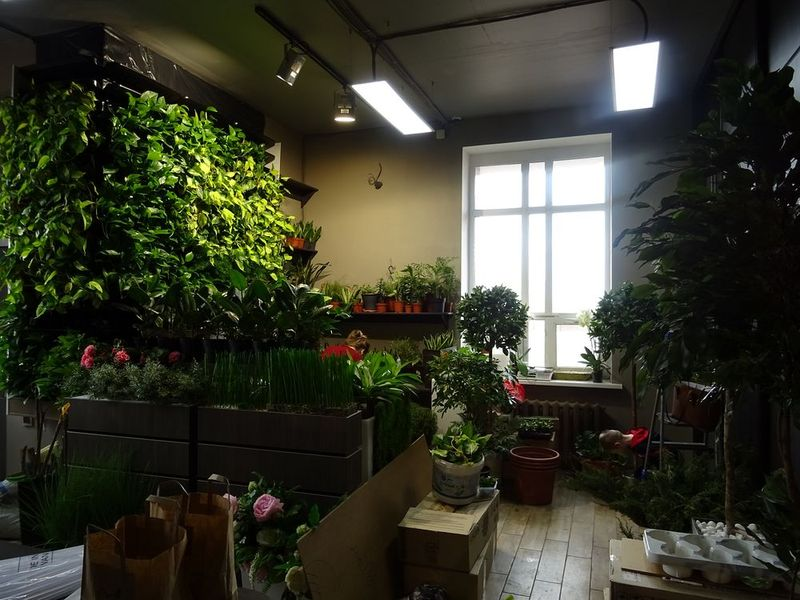 Комнатные растения оптом